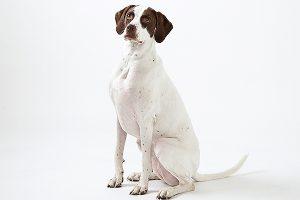 ペットモデル タレント犬