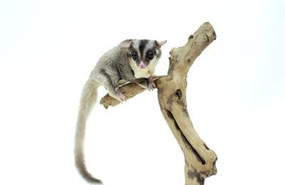 ペットモデル 動物プロダクション アニマルプロ