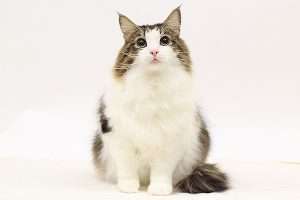 ペットモデル タレント猫