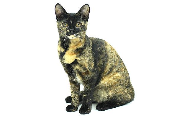 ネコ イメージ