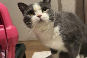 ペットモデル タレント猫 アニマルプロ