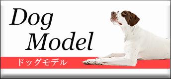 Dog model ドッグモデル