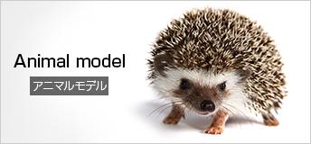 Animal model アニマルモデル