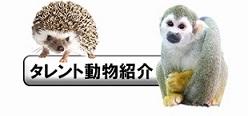 タレント動物紹介