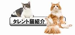 タレント猫紹介