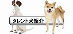 タレント犬紹介